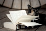 veterinario gatos caxias - entre livros e gatos 3